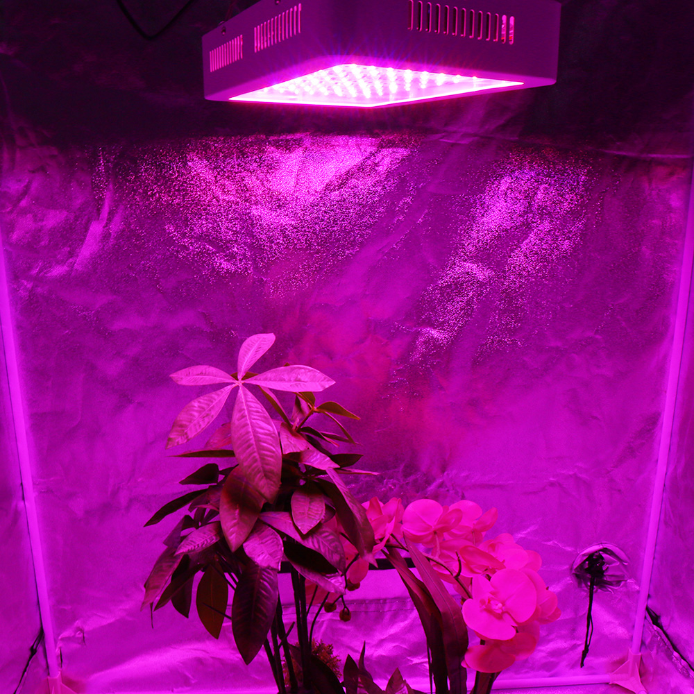 Image 5 - 1000W Full Spectrum LED Grow Light Double Chip Growing Plant Lamp for hydroponics vegs greenhouse grow tent indoor plants-in LED Grow Lights from Lights & Lighting