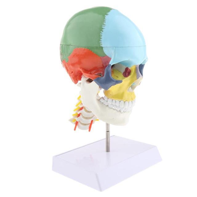 1:1 色 22 部品人間の頭部の頭蓋骨と頚椎人間の解剖学的解剖骨格モデル医療ベージュ彫刻