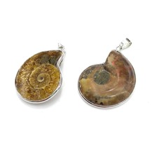 Wholesale New Natural Pendant Shells Stone, Snails, Pendants, Marine Heavy Objects, Conch Jewelry, Necklaces,30x40mm