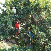 Światło led na energię słoneczną ptak papuga lampa z klipsem lampki nocne na ogrodowa ścieżka Ornament HYD88 w Kryształy ogrodowe od Dom i ogród na