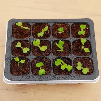 6 12 otwór przedszkole doniczka sadzenia nasion taca z tworzywa sztucznego kwadratowy kiełkowania roślin pole ogród rosnąć pole artykuły ogrodnicze tanie i dobre opinie seed planting box Nie powlekany