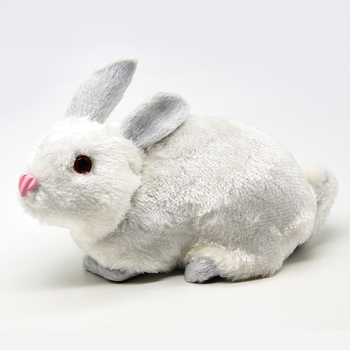 Rabbit Model Primary School Science Experimental Equipment Students Use Learning Tools Biology Teaching Aids