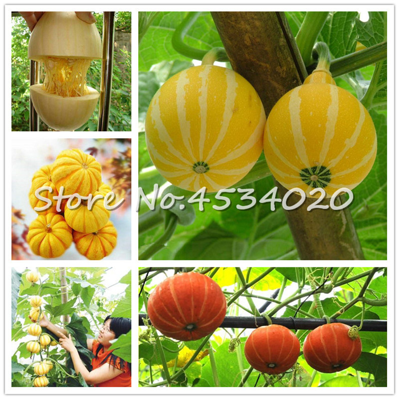 Hot Sales! 30 Pieces Most Watched Value Of Pumpkin Bonsai Mandarin Duck Pear Pumpkin Of Perennial Garden Ornamental Potted Plant