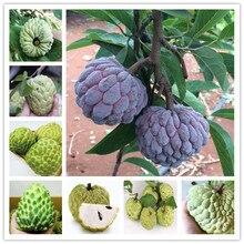 10 шт. бонсай сладости сахар-яблоня(Annona squamosa) вкусные съедобные тропические фрукты многолетние для домашнего сада посадки