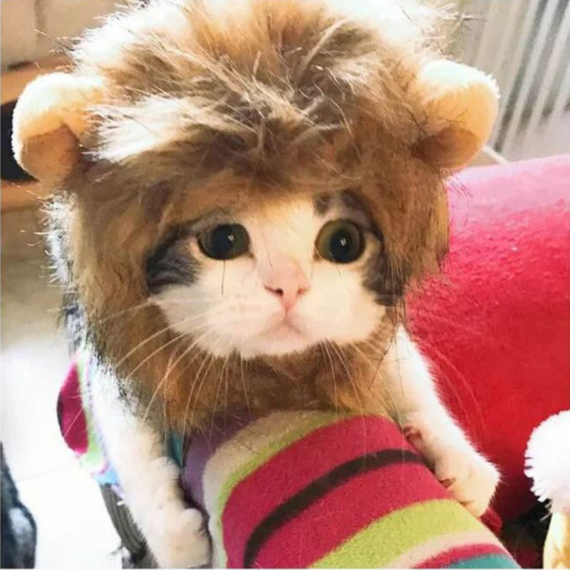 Pet Hair Headgear For Small Dog And Cats, Mane Wig Puppy Costume For Halloween Christmas