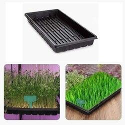 6 paczek plastikowe tace hodowlane odżywianie miska taca na nasiona kaseta do sadzonek do szklarni hydroponika sadzonki kiełkowanie roślin w Tacki i pokrywy do sadzonek od Dom i ogród na