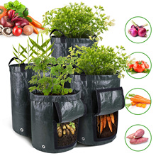 New Potato Cultivation Planting…