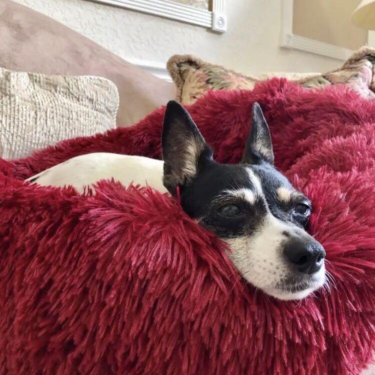 Dog & Cat Long Plush Pet Bed Calming Beds - Ultra-soft Pets Basket Kennel Dog Round Cat Winter Cushion Warm Sleeping Bag Mat 1