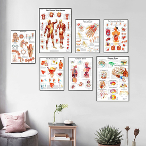 Human Anatomy Muscles System Art Poster Print Body Map Canvas Wall Pictures for Medical Education Home Decor(China)