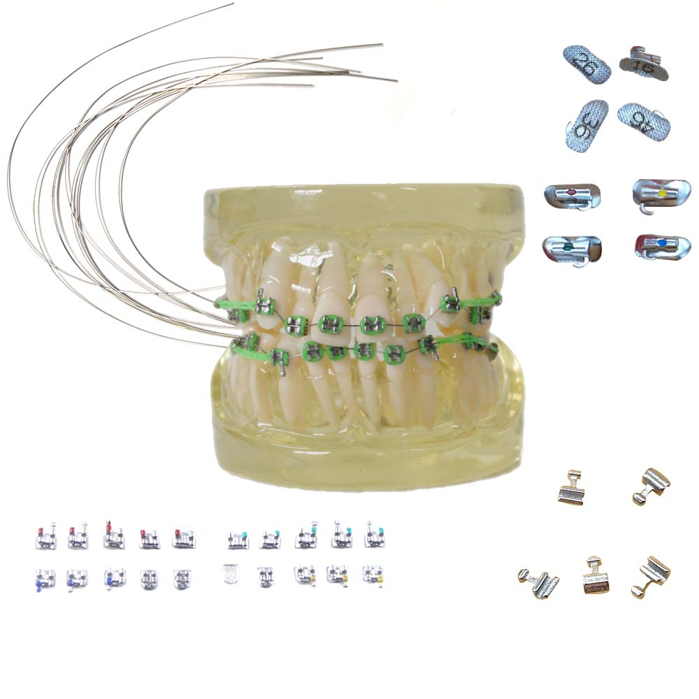 Dental Material Tools Orthodontic Material Ceramic Stainless Steel Niti Ortho wires Tooth Bracket Model Dentist Equipment Supply(China)
