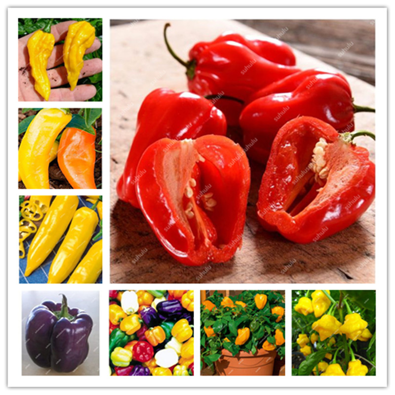 100 Pcs Sweet Pepper Bonsai Colorful Mix High Quality Sweet Bell Pepper Bonsai Vegetables Paprika Home Garden Bonsai Plants