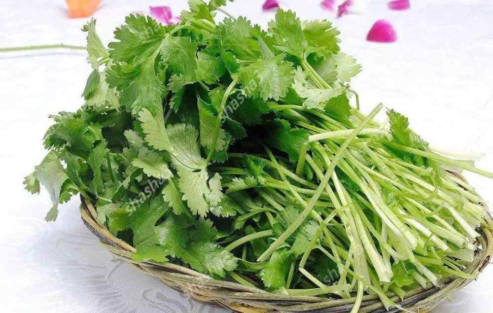 Parsley Bonsai Concentrated Flavor And Tender Crisp Celery Bonsai small home garden cultivati Free Shipping