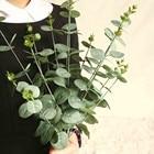 Money Leaf With Gras...