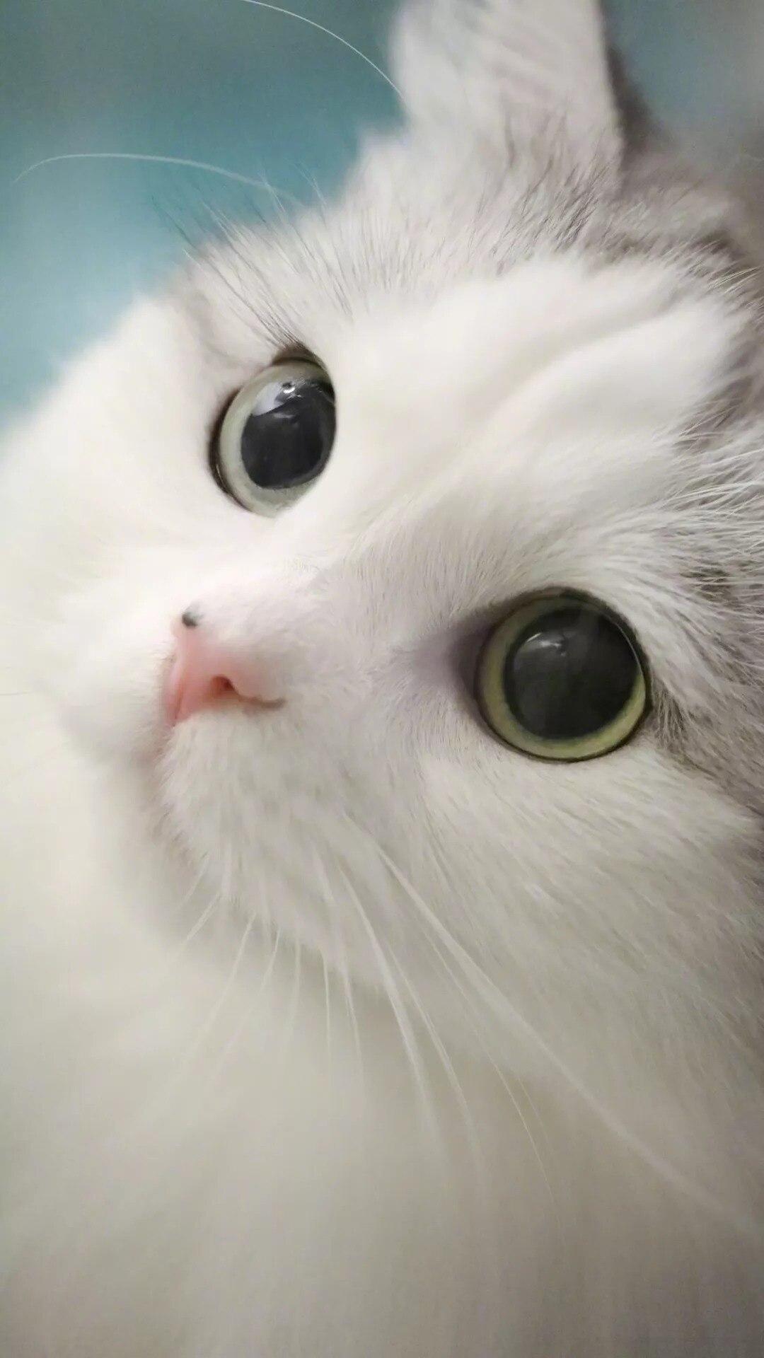 猫片壁纸 :生活不断拍打我们的脸皮,最后不是脸皮厚了,是肿了!插图1