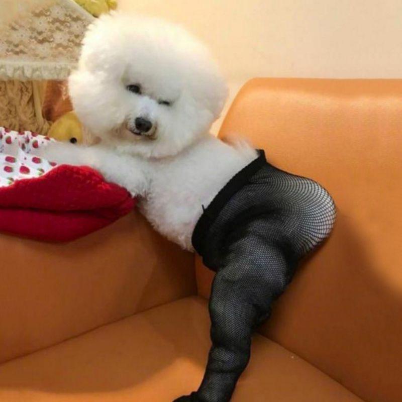 Pet Mesh Socks Elastic Fun Creative Pets Stockings Photo Props Dog Trick Or Treat Stocking Decorations