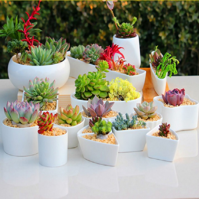 2019 Ceramic Flower Pots For Juicy Plants Small Bonsai Pot Home And Garden Office Decor Mini Succulent Plant Pots Decoration E