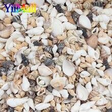 20 grama vários mistos conchas de mar natural coquillage caber tanque de peixes praia decoração tema festa em casa decorações