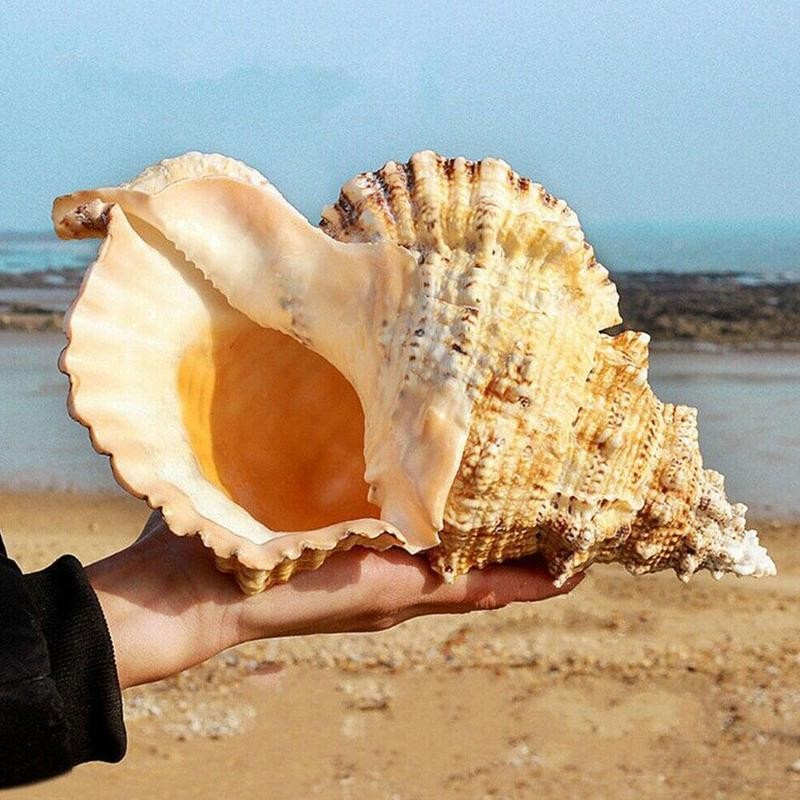Большие раковины для украшения морских раковин, натуральные украшения для морских раковин, вечерние украшения для свадебного фестиваля, от...