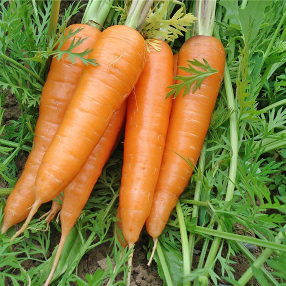 100pcs Carrot Seeds Sower Vegetable Fruit Grow Seedling Garden Supplies