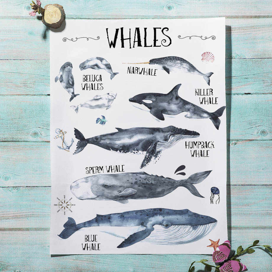 Download Poster Digital Paper Vintage Antique Whale Shark 8x10 Wall Art fish beach crafting Scrapbooking boy nursery card making labels tags
