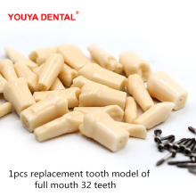 1pc Dental Tooth Model For Filling Training Practice Simulation  Replacement Teeth Model Teaching Dentist Exam Material Supplies