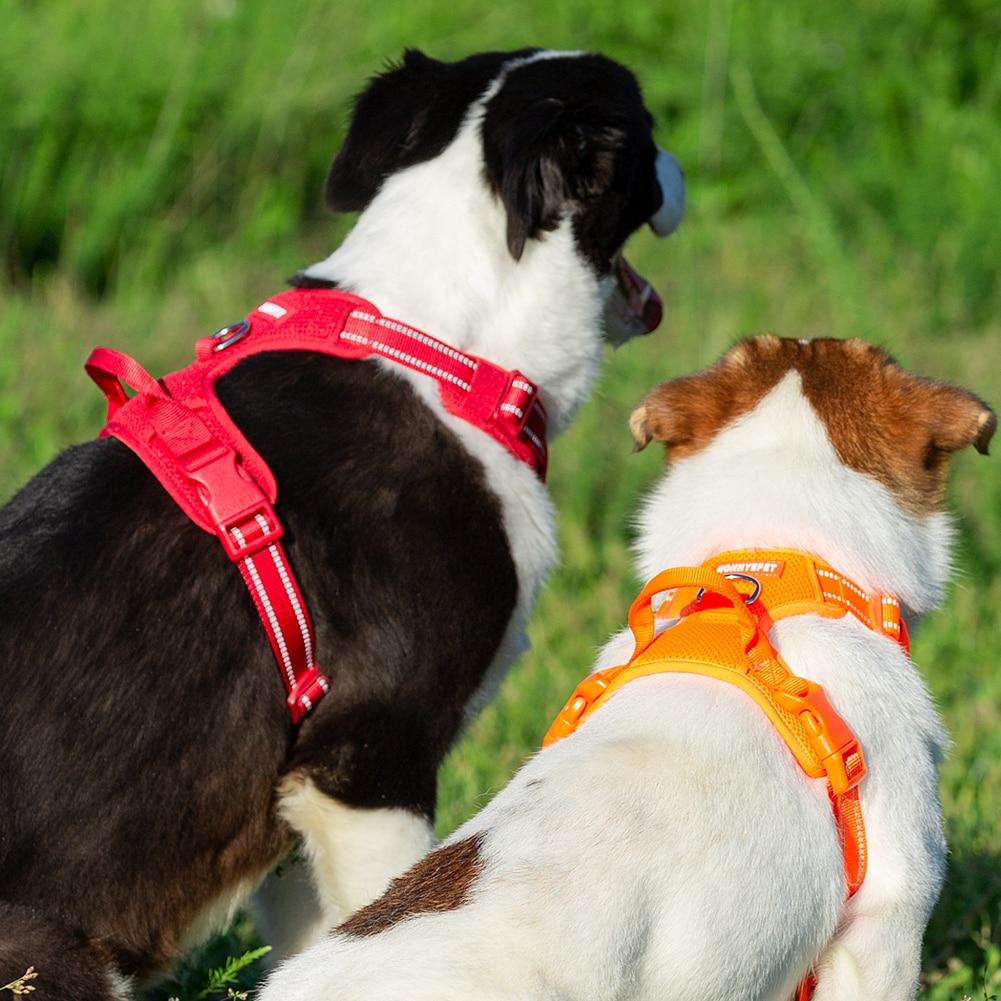 Köpek göğüs tasması hep21