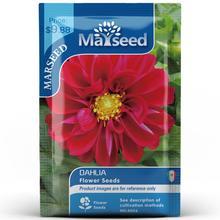 American Heirloom MARSEED Dahlia Pinnate Flower Seedsplants Seedling Garden Outdoor