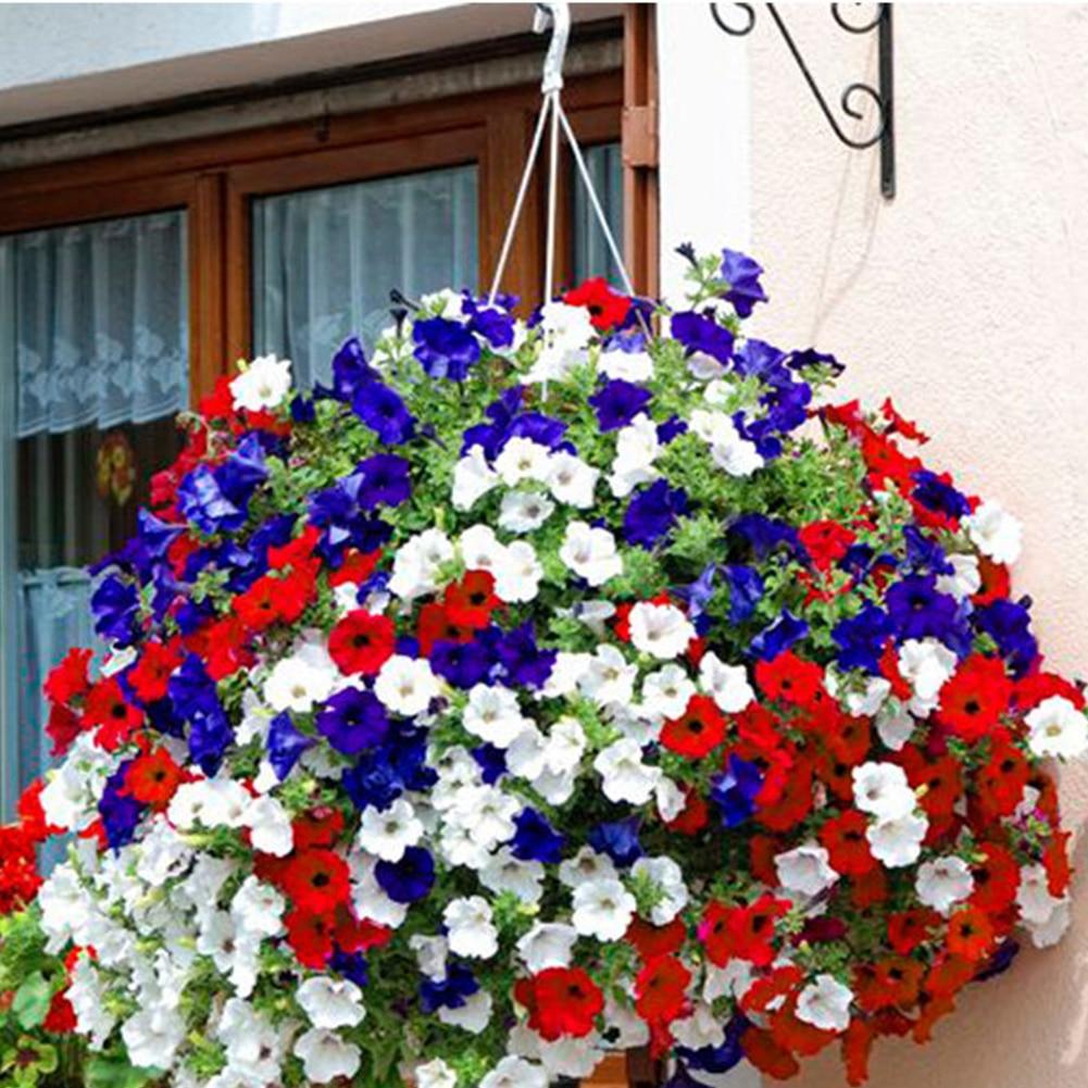 100Pcs Petunia Seeds  Bonsai Flower Seeds Plant Ornamental For Home Garden