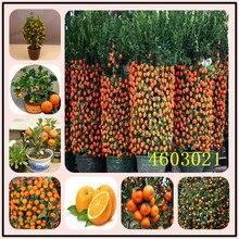 20 шт цитрусовые растения бонсай мандарин апельсин бонсай съедобные фрукты дерево бонсай растение здоровая еда домашний сад легко выращивать