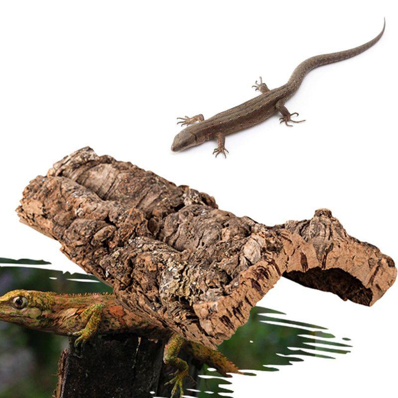 Reptile Climbing Cork Bark Natural Wood Habitat Lizard Spider Pet Hiding Place Rtengtunn Tree Bark S