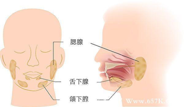 按摩3处唾液腺 促进唾液分泌 保养喉咙