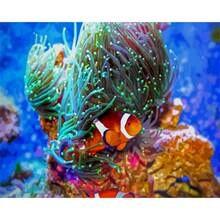 Ruopoty искусства по номерам с морскими водорослями медузы животного