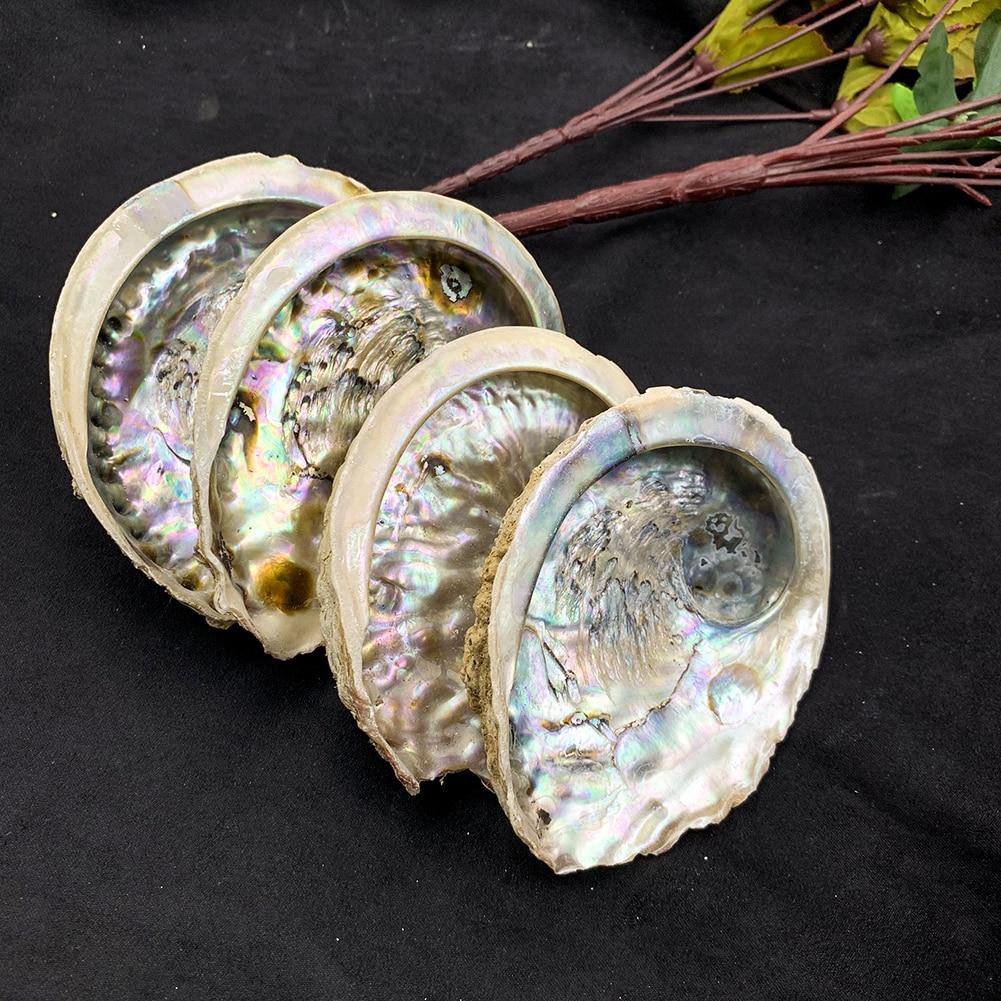 11-12cm Seashells Natural Abalone Shells Ocean Home Decor DIY Nautical Wedding Decoration Soap Holder Shells for Jewelry Making 3