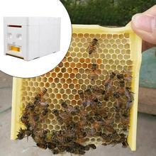 Skrzynka o strukturze plastra miodu pszczoły skrzynka ogonowa zbiór miodu o strukturze plastra miodu pszczoła król pianki narzędzia pszczoła pszczelarstwo o dużej gęstości pole zapylania C5Z2 tanie tanio KITPIPI Hive Box