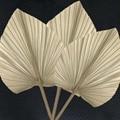 20 ~ 23*40 см, 2 шт. сушеные натуральные листья пальмы, сделай сам сухие цветы веерный лист пальмы для вечерние настенные украшения, свадебные укр...