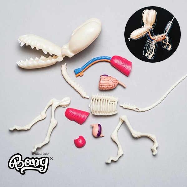 Jason Freeny 26 części 4d duży balon pies przezroczysty szkielet Model perspektywa anatomia kości Puzzle montaż zabawki weterynaryjne