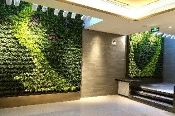 """【北京植物墙】樾长安别墅样板房用上""""秀根""""智能生态绿植墙"""