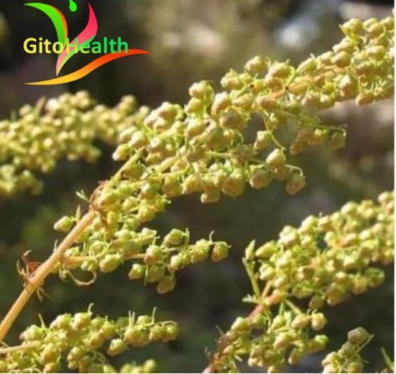 Graines dartemisia annua de haute qualité 99% phytothérapie chinoise taux de germination élevé 1pc Festival haut artémisinine livraison gratuite.