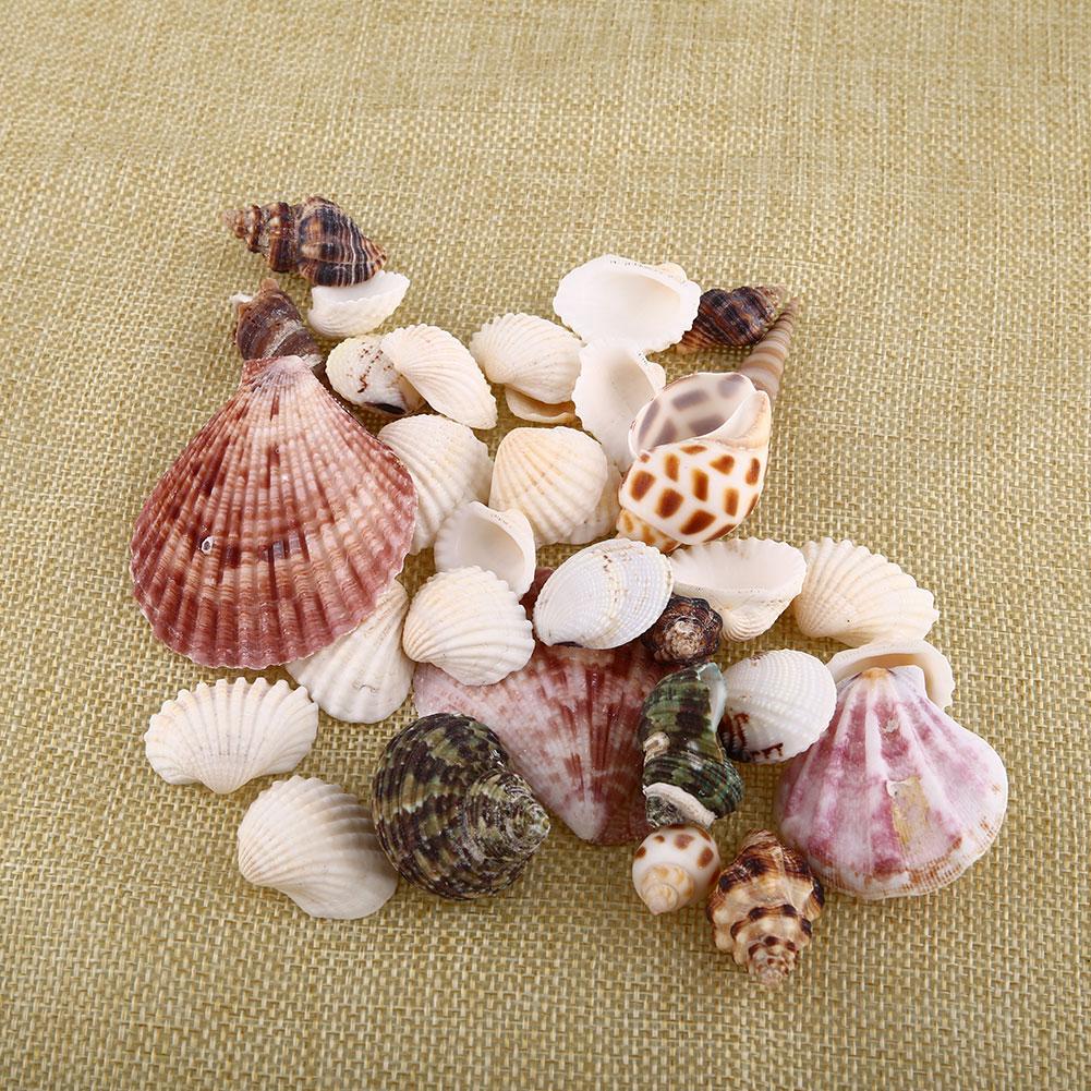 New 100g Beach Mixed Sea Shells Craft SeaShells Aquarium Nautical Decor