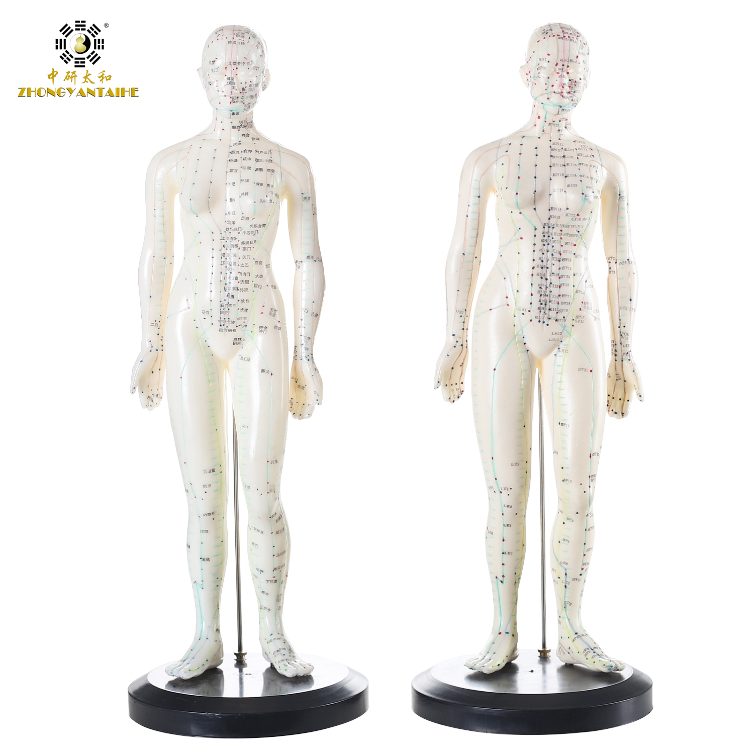 26cm Male Human Acupuncture Points Model Acupuncture Point Model Chinese Body Model For Acupuncture Point