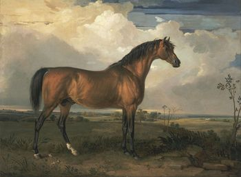 """Details about   high quality 36x24 oil painting handpainted on canvas """"a horse"""""""