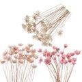 30 шт., декоративные сушеные цветы, 15 цветов