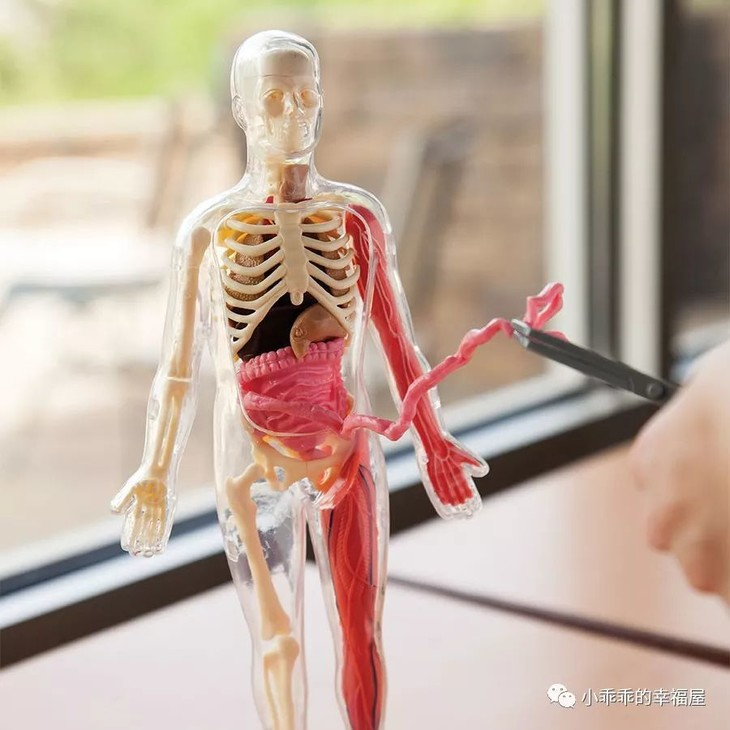 21 Removable Parts  Squishy Human Body Medical Anatomy Model SmartLab Educational Toys