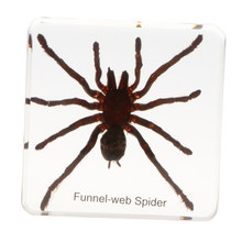 Tarantulas Spider Specimen Insect Paperweight Taxidermy, Science Nature Educational Toy Gift Ornament(China)