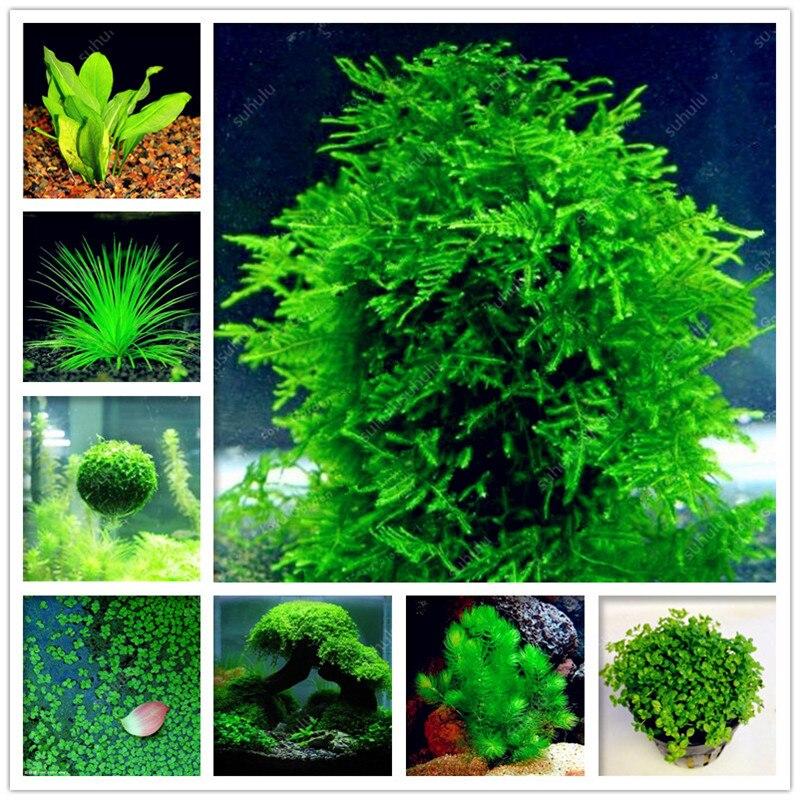 500 Pcs Aquarium Grass Bonsai Water Aquatic Plant Bonsai Family For Decorate The Aquarium Green Water Grass Decor Landscape