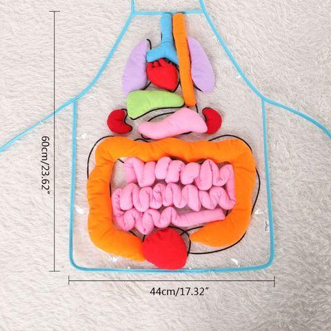 anatomia orgaos avental orgaos do corpo humano