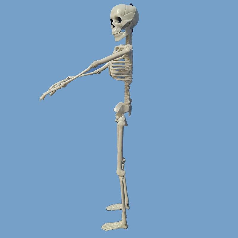 Image 4 - 5 Pcs Human Anatomy Skeleton Skeleton Model Medical Medicine Learning Aid Anatomy 1 Pair Skull Skeleton Hand Bone HalloweenMedical Science   -