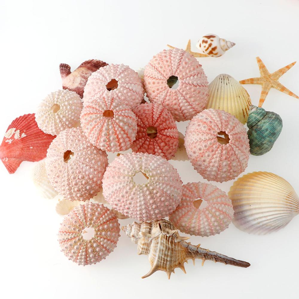 2/4/6pc 3-5cm Pink Color Sea Urchin Natural Shell Conch Design Window Starfish Gift Table Fish Tank Decoration Home DIY Wall