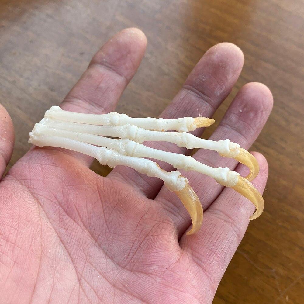 articulados garras patas taxidermia