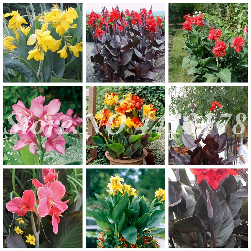 100  Canna Lily   Artificial Decor